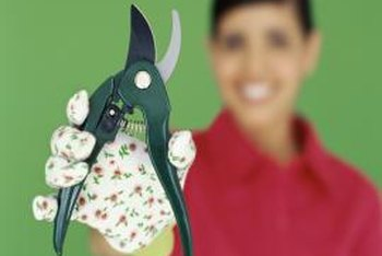 Bypass pruners and gloves are necessities for pruning Knock Out roses.