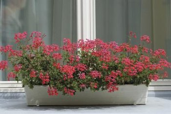 Properly potted flowers provide striking color.