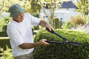 Selecting slow-growing plants keeps your hedge under control.