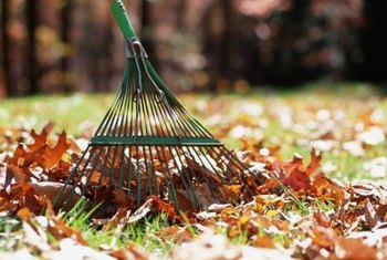 Clear fallen leaves to prevent disease-causing spores from spreading through your chokecherry.