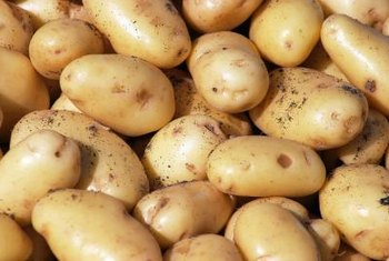 Cut seed potatoes provide more plants from fewer potatoes.