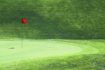 Creeping grasses are used on golf courses.