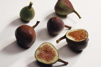 Fig trees need long hours of sunshine and warm temperatures to produce fruit.