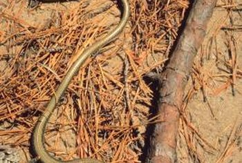 Make your yard inhospitable to snakes to keep them away.