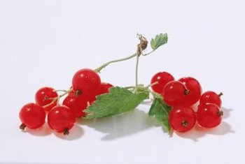 Currant bushes produce black, red or white fruit, depending on the variety.