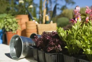 Pots should match the growth patterns of their plants.