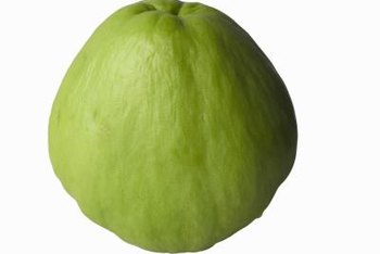 The chayote originated in Central America.