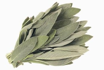 Sage is a soft grey-green color named for the herb.