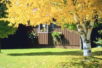 Fall is the best time to start renovating your lawn.