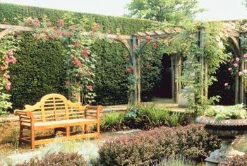 Create a romantic seating area with climbing roses.