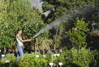 Drip irrigation uses less water than spraying with a hose.