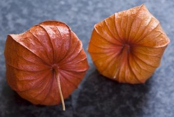 Chinese lantern flowers are related to tomatoes, peppers and petunias.