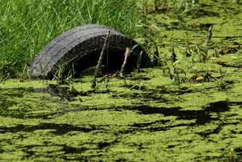 Some algae can be removed from ponds with an algae rake.