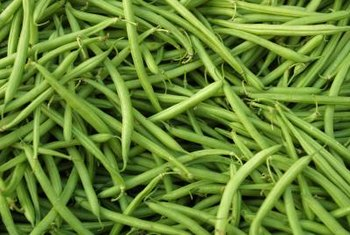 Protect green beans from bugs using a mixture of methods.