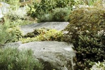 Use groundcover between rocks in your garden.