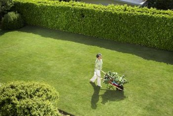 Create private garden spaces with evergreen hedges.