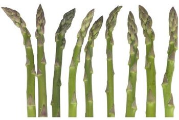 Asparagus spears left to grow will eventually develop into ferns.