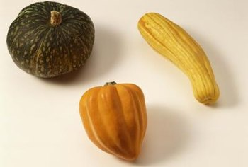 Squashes are native to North America.