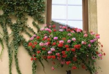 Use window sill pots and planters for window gardening.