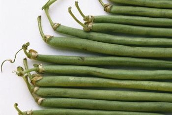 Growing beans vertically saves garden space and produces larger yields.
