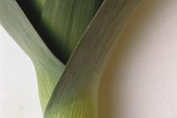 Leeks look similar to a scallion or green onion with larger, flatter leaves.
