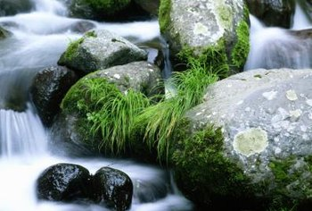 Dwarf mondo grass tends to grow well near water features.