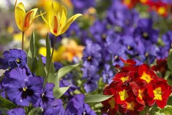 Small flower beds can be as colorful as large extensive gardens.