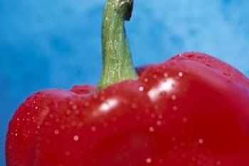 Bell peppers grown at temperatures above 75 degrees may develop yellow coloration.