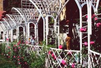 Trellises come in a variety of shapes.