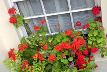 Plant boxes for enjoyment from both sides of the window.