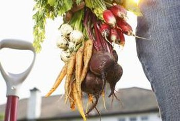 Root vegetables such as radishes, carrots and beets have similar soil requirements.