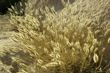 Dried grasses add a long-term natural vibe to your decor.