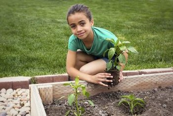 A raised bed has good drainage, which helps prevent pepper diseases.