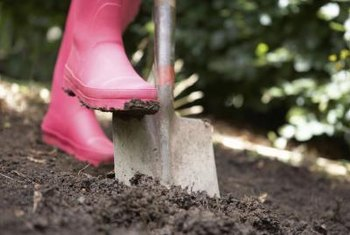 Wet garden spots can be troublesome unless you find plants that thrive in those conditions.