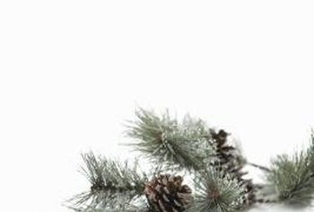Dwarf pines are attractive and easy to prune.