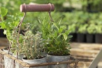 Metal planters may overheat the plants' roots.