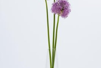 Blooming chives stay fresh when you keep them in water.