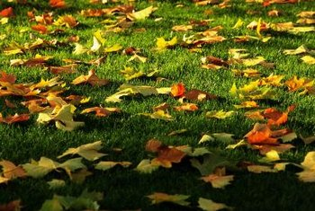 High-lift blades draw leaves upward from a lawn.