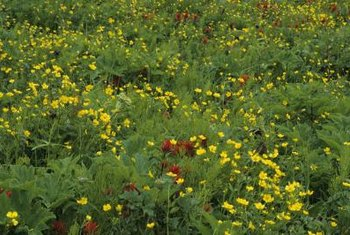 Wildflowers are easy to grow from seed.