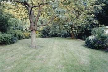 Even when grass will grow well around a tree, the tree bark often shows scars from being hit by the lawn mower.