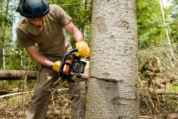 Proper safety gear and tools are crucial to cutting down trees safely.