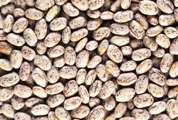 Pinto beans lose their mottled color when cooked, turning pinkish-brown.