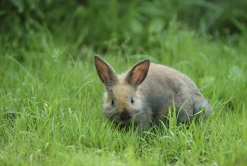 Fencing protects gardens from rabbit damage.