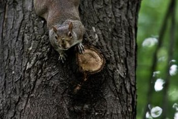 Squirrels use trees for food and shelter.