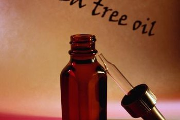 Among its many other benefits, tea tree oil has fungicidal properties.