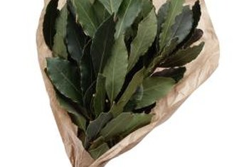 In ancient Greece, bay-leaf wreaths crowned the heads of Olympic champions.