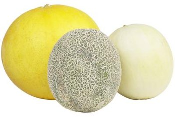 Grow a variety of melons in a small garden by using racks.