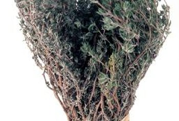 Thyme is an ingredient in bouquet garni and herbes de Provence.