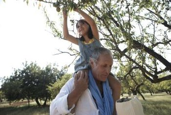 Hand harvesting almonds is more fun with someone you like.