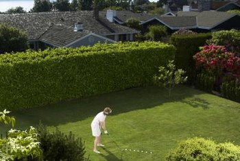 A lawn roller will help keep your yard free of small lumps and bumps.